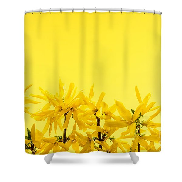 Spring Yellow Forsythia Shower Curtain by Elena Elisseeva