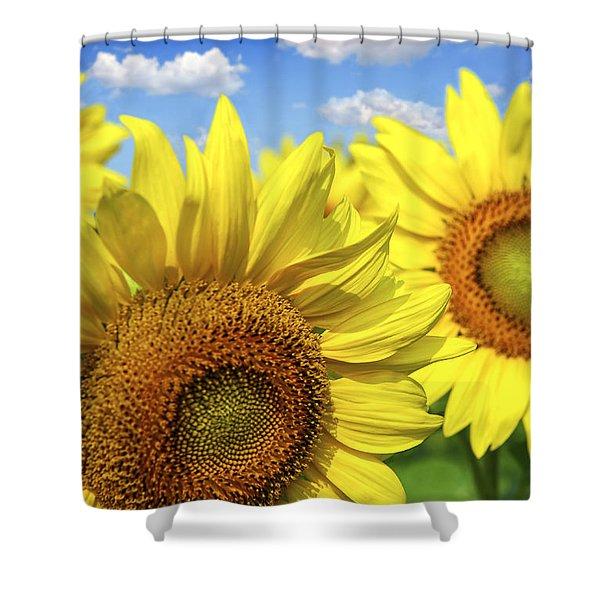 Sunflowers Shower Curtain by Elena Elisseeva