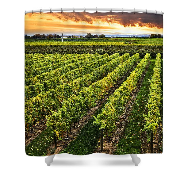 Vineyard at sunset Shower Curtain by Elena Elisseeva