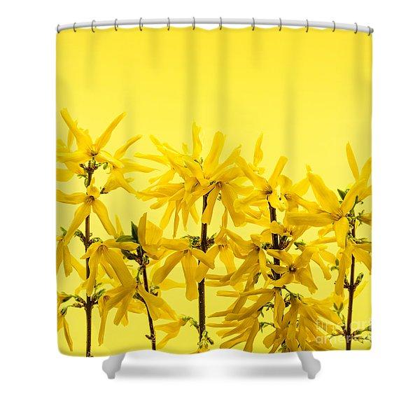 Yellow Forsythia Flowers Shower Curtain by Elena Elisseeva