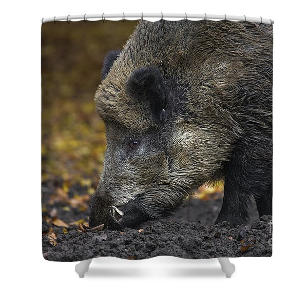 121213p269 Shower Curtain by Arterra Picture Library
