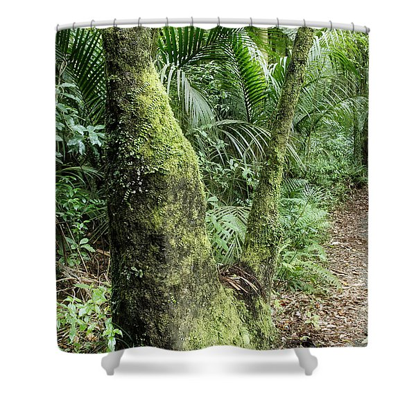 Tropical forest Shower Curtain by Les Cunliffe