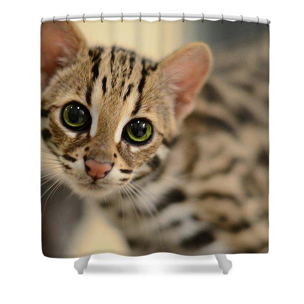 Asian Leopard Cub Shower Curtain by Laura  Fasulo