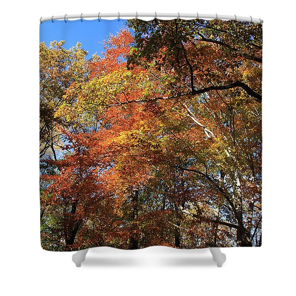 Autumn Trees Shower Curtain by Frank Romeo