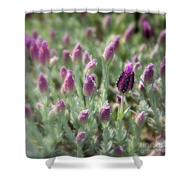 Lavender Standout Shower Curtain by Carol Groenen