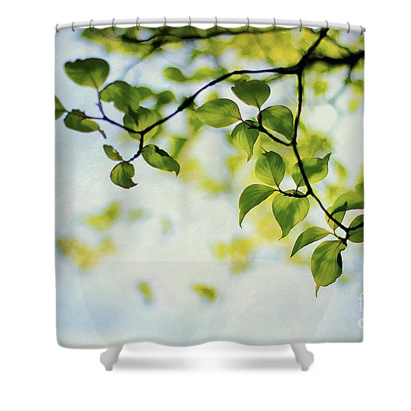 Looking Up Shower Curtain by Darren Fisher
