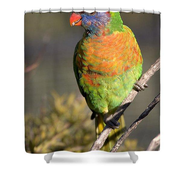 Rainbow Lorikeet Shower Curtain by Steven Ralser