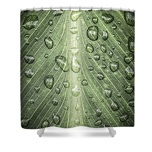 Raindrops on green leaf Shower Curtain by Elena Elisseeva