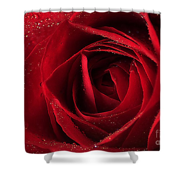 Red Rose Shower Curtain by Darren Fisher