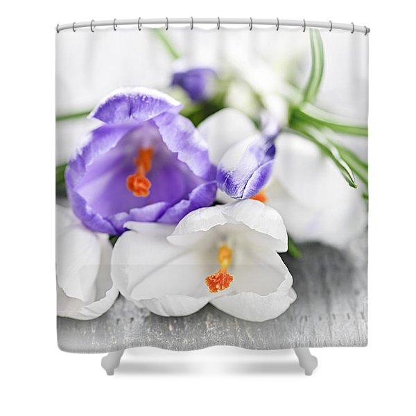 Spring Crocus Flowers Shower Curtain by Elena Elisseeva