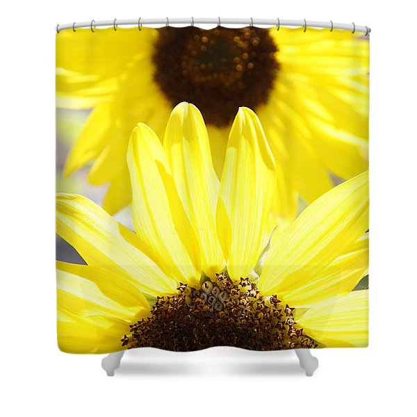 Sunflowers Shower Curtain by Les Cunliffe