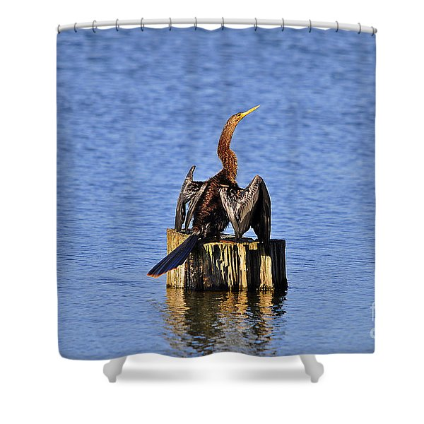 Wet Wings Shower Curtain by Al Powell Photography USA