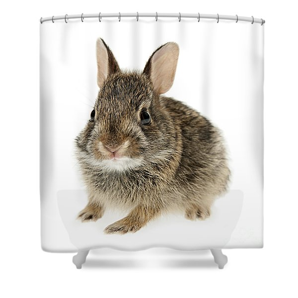 Baby cottontail bunny rabbit Shower Curtain by Elena Elisseeva