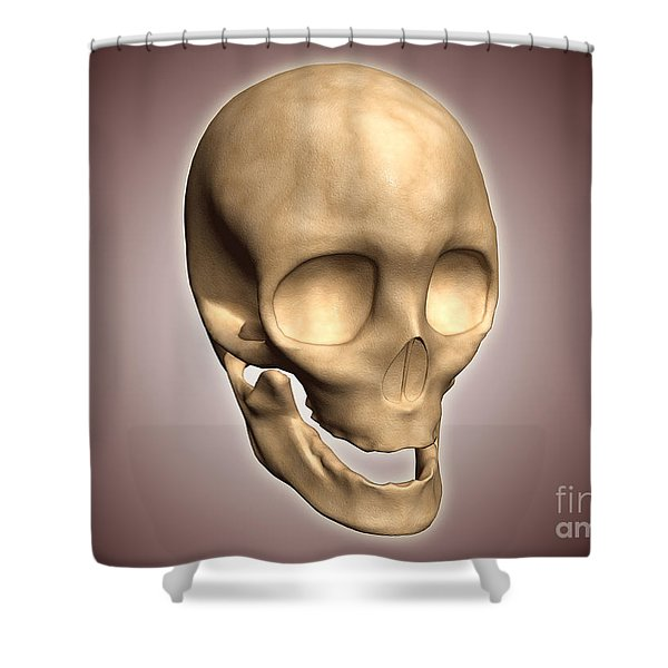 Conceptual Image Of Human Skull Shower Curtain by Stocktrek Images
