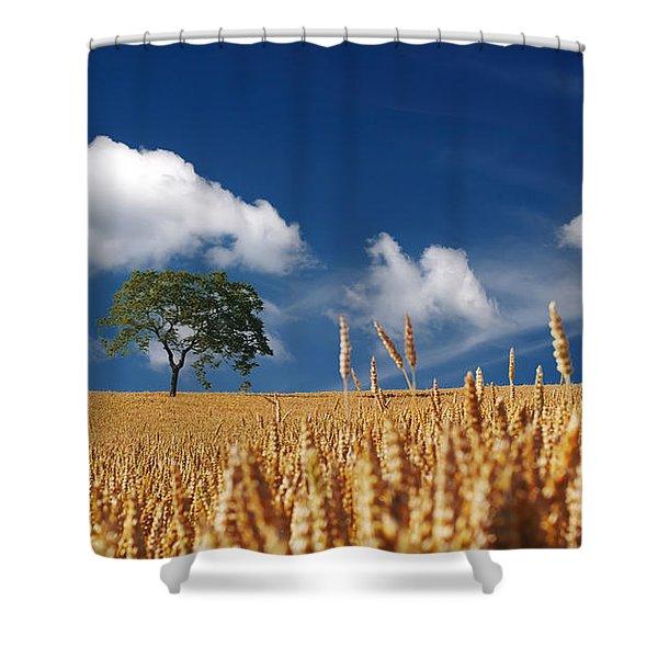 Fields of Grain Shower Curtain by Mountain Dreams