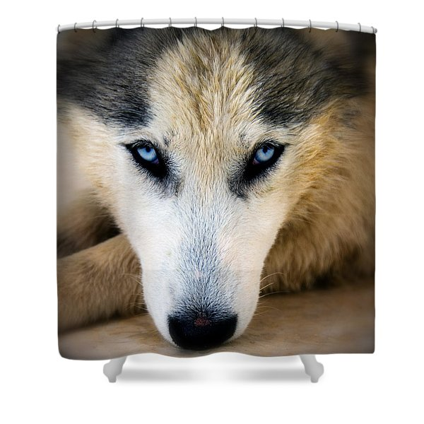 Husky  Shower Curtain by Stylianos Kleanthous