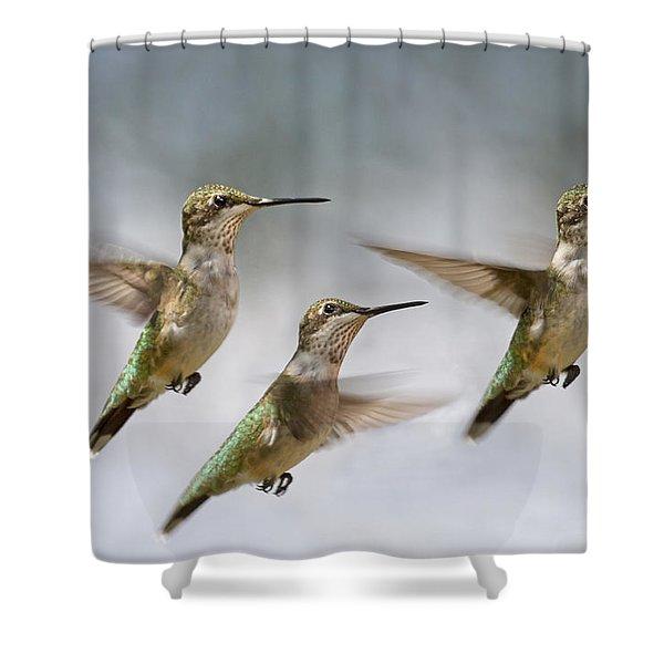 Trio Shower Curtain by Betsy C  Knapp