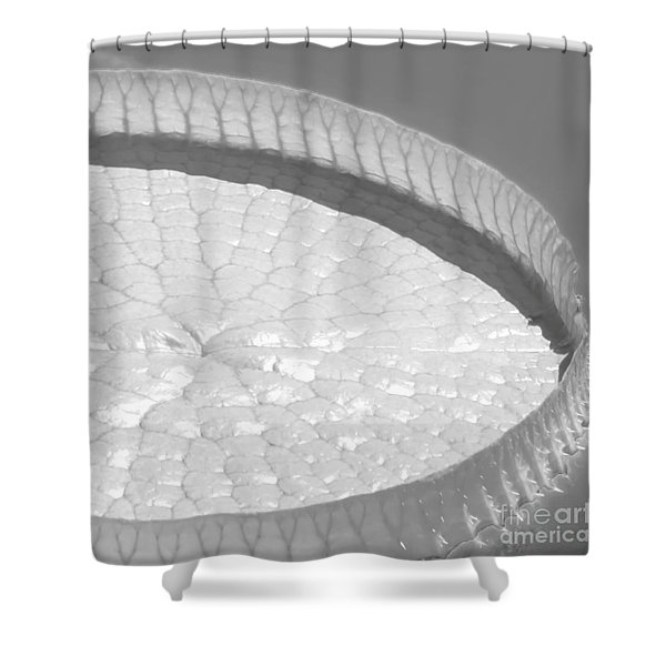 #3a Shower Curtain by Sabrina L Ryan