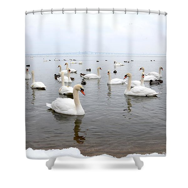 60 Swans A Swimming Shower Curtain by Laurel Best