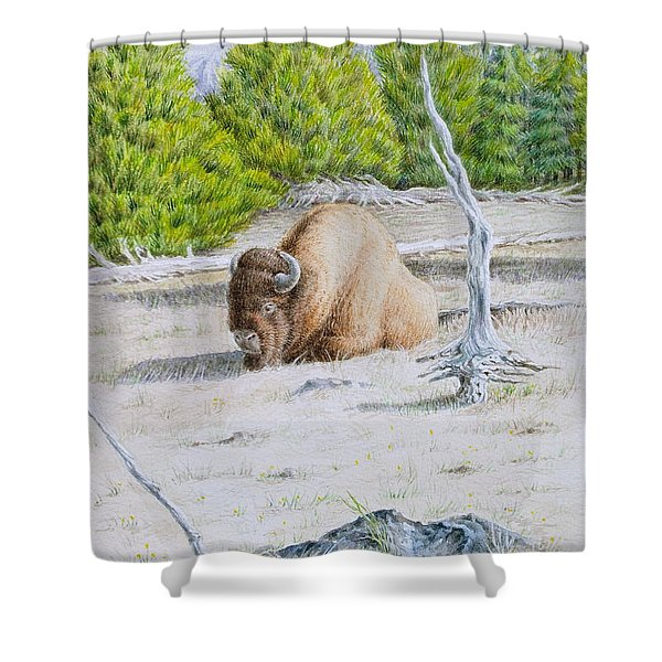 A Buffalo Sits in Yellowstone Shower Curtain by Michele Myers