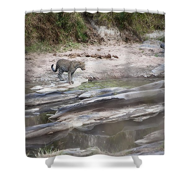 A Cheetah Stands At The Edge Of The Shower Curtain by Diane Levit
