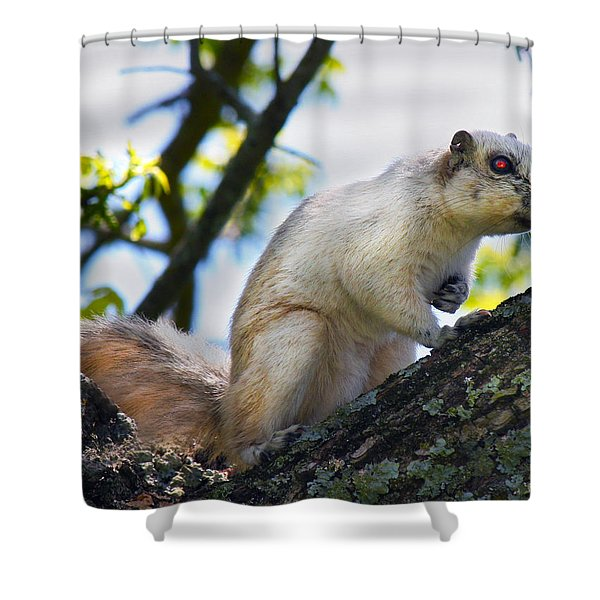 A Fox Squirrel Pauses Shower Curtain by Betsy C  Knapp