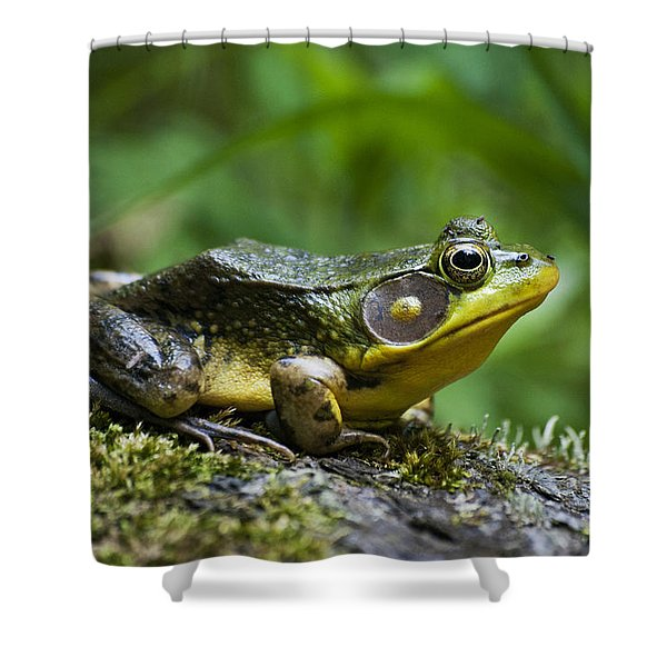 A Frog Is Forever Shower Curtain by Christina Rollo
