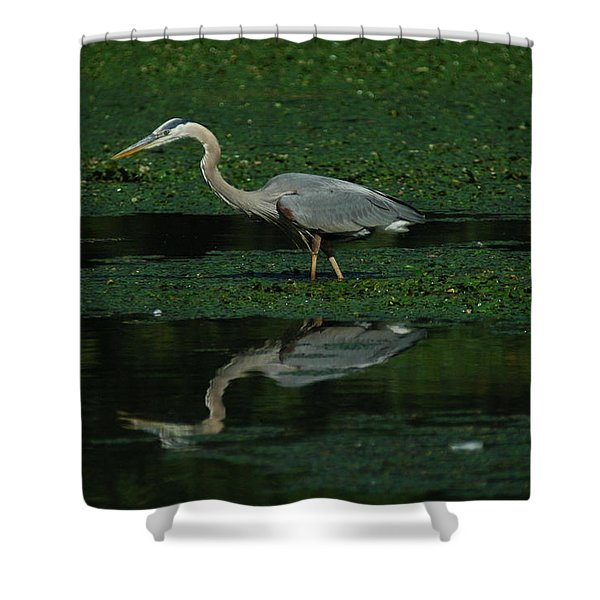A Heron Hunting Shower Curtain by Raymond Salani III