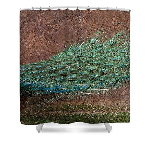 A Peacock Shower Curtain by Ernie Echols