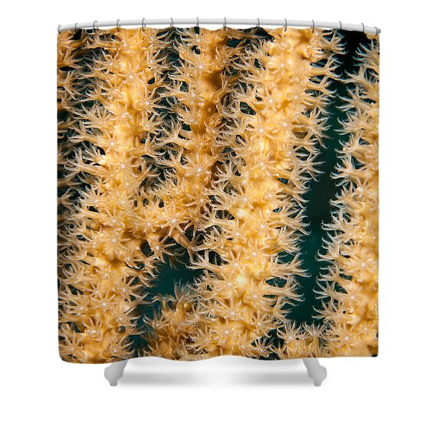 A Polyp Line Shower Curtain by Jean Noren