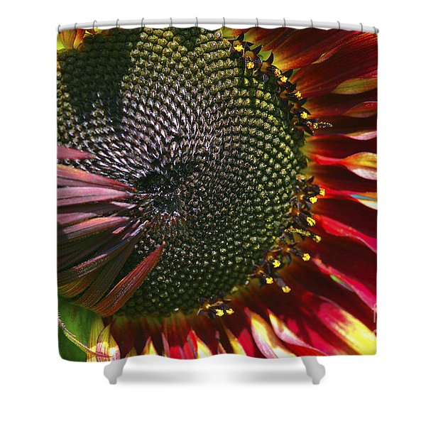 A Sunflower For The Birds Shower Curtain by Sharon  Talson