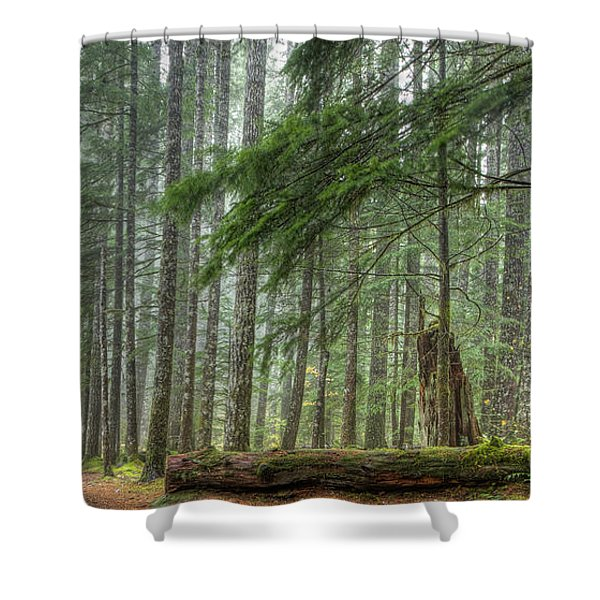 A Walk Through the Forest Shower Curtain by Jean Noren