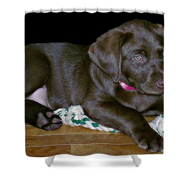 Abby Shower Curtain by Barbara S Nickerson