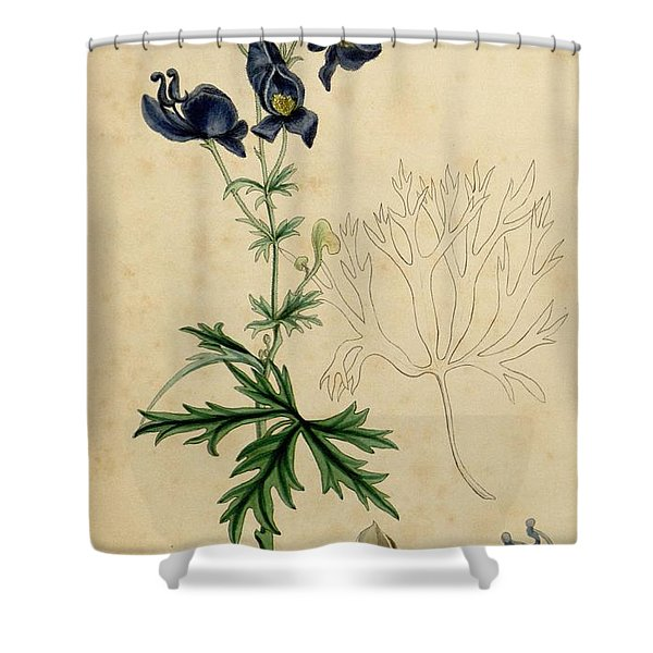 Aconitum Napellus by Sowerby Shower Curtain by Philip Ralley