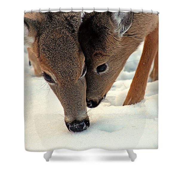 Adoring Love Shower Curtain by Karol  Livote