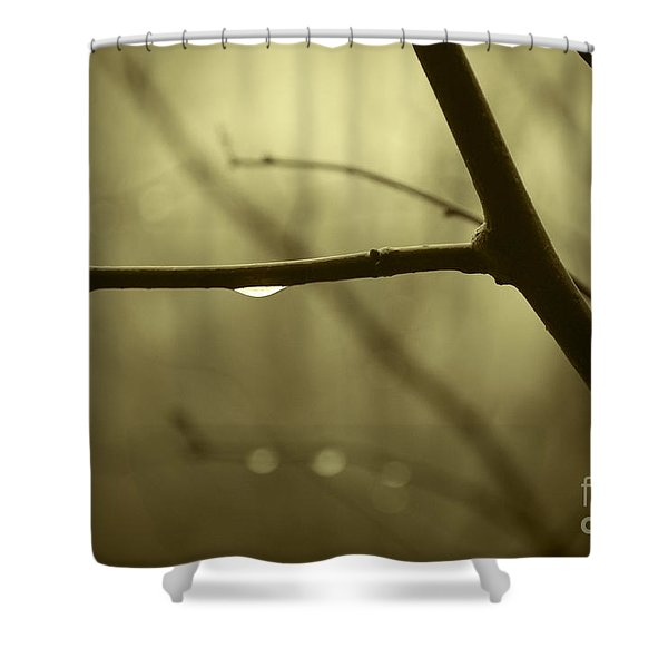 After It Rained Shower Curtain by David Gordon