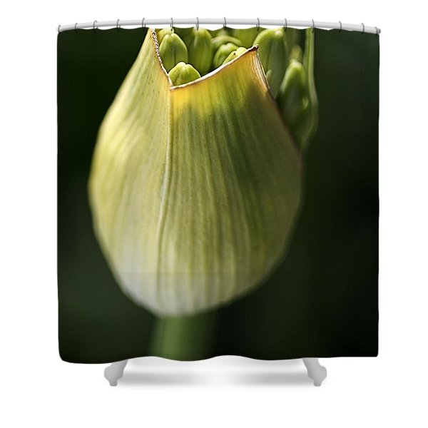 Agapanthus In The Daylight Shower Curtain by Joy Watson