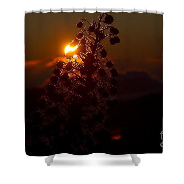 Ahinahina - Silversword - Argyroxiphium sandwicense - Sunrise on the Summit Haleakala Maui Hawaii  Shower Curtain by Sharon Mau