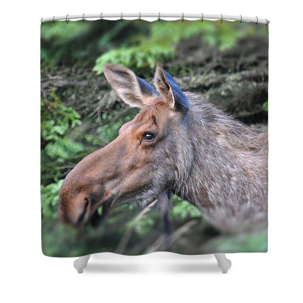 Alaska Moose Shower Curtain by Debra  Miller