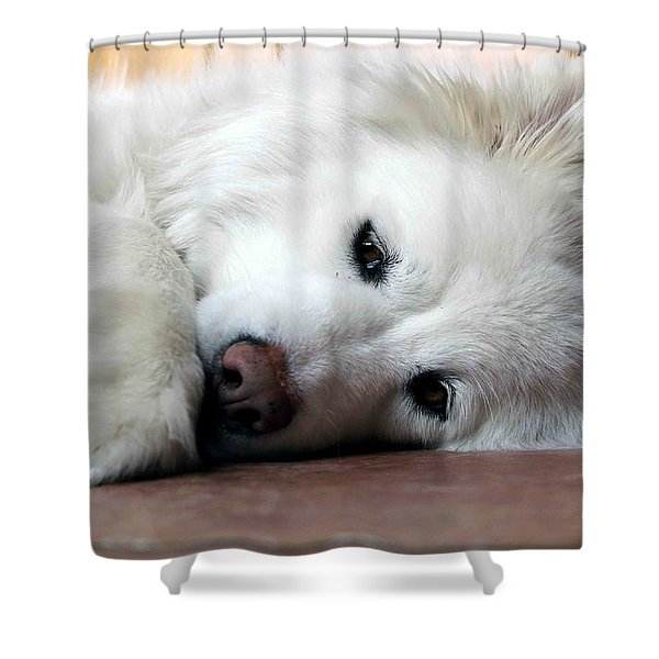 All You Need Is Love Shower Curtain by Fiona Kennard