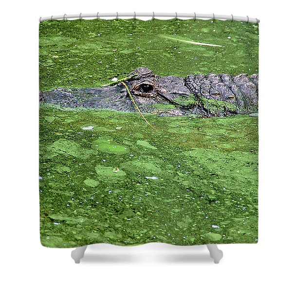 Alligator In Swamp Shower Curtain by Aimee L Maher Photography and Art