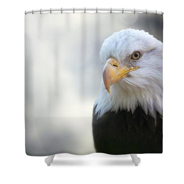 American Eagle Shower Curtain by Jason Politte
