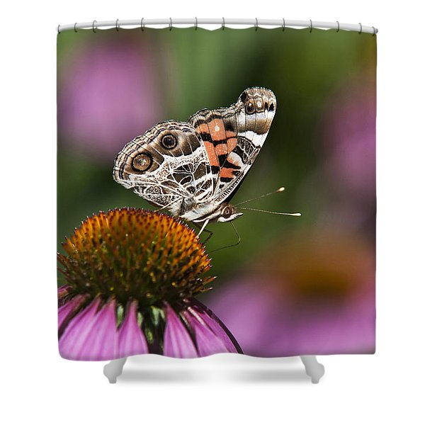 American Painted Lady Butterfly Shower Curtain by Christina Rollo