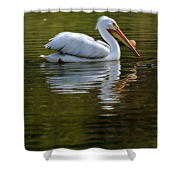 American White Pelican Shower Curtain by Elizabeth Winter