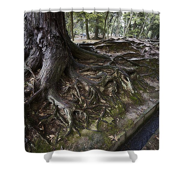 ANCIENT TREES of NARA PARK Shower Curtain by Daniel Hagerman