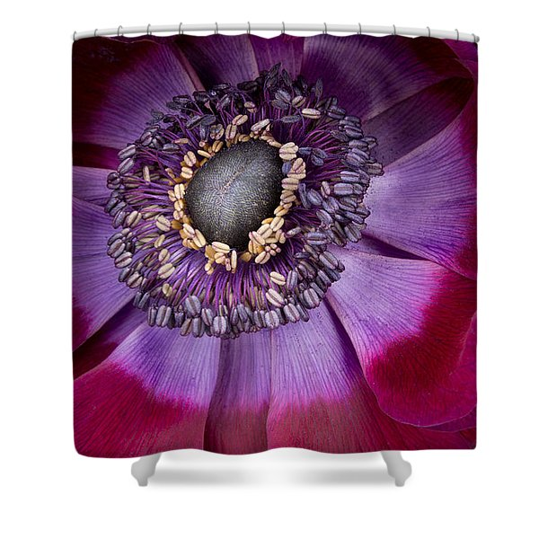 Anemone Coronaria  Macro Shower Curtain by Ann Garrett