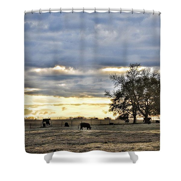 Angus Evening Shower Curtain by Jan Amiss Photography