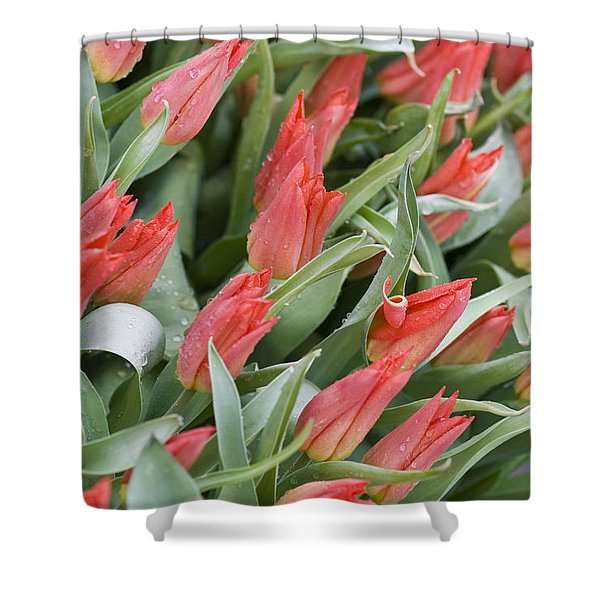 Anticipation Shower Curtain by Juli Scalzi