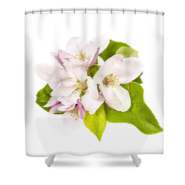 Apple blossom Shower Curtain by Elena Elisseeva