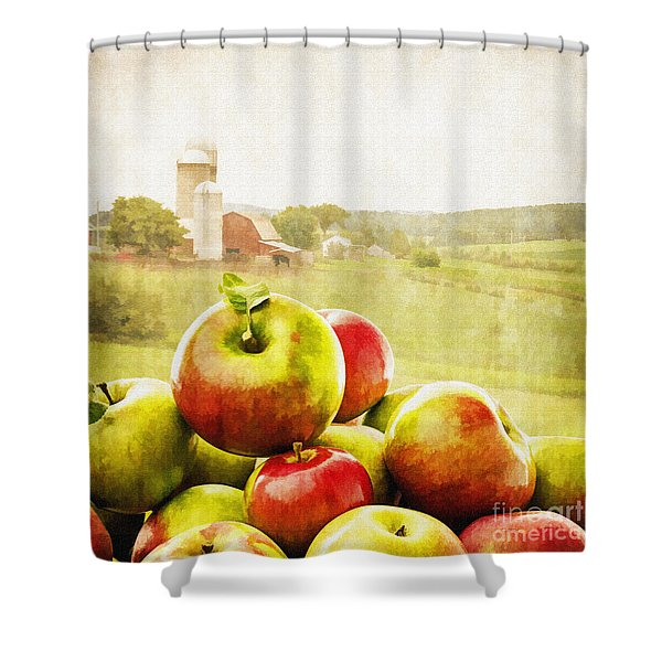 Apple Picking Time Shower Curtain by Edward Fielding